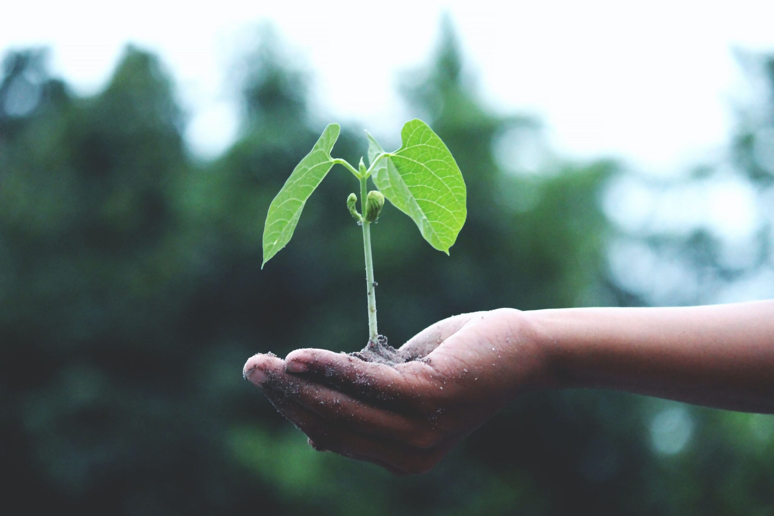 Sustainability as top priority